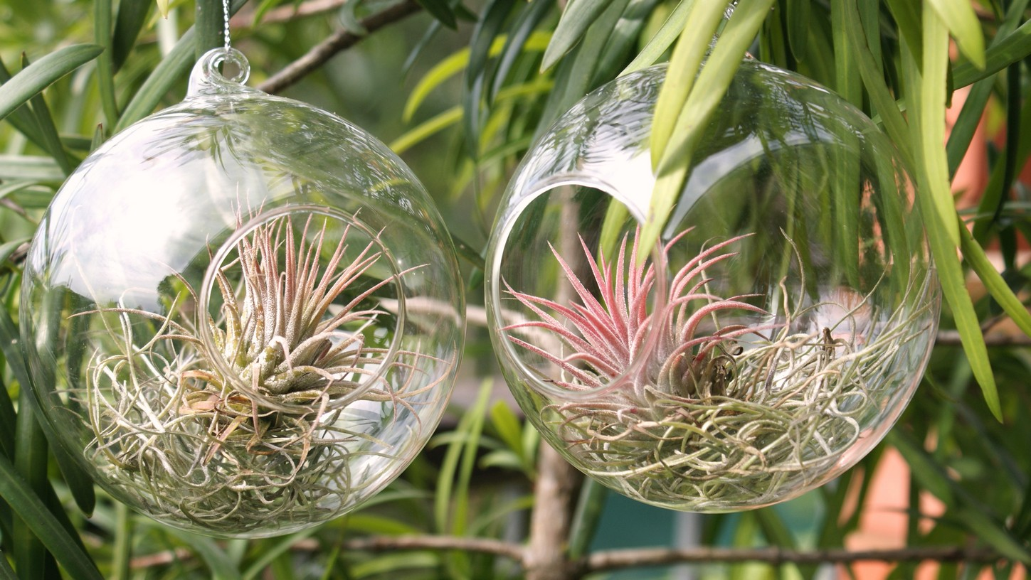 round-glass-ball-with-plant